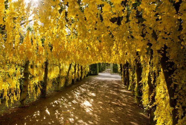 path-under-trees-park
