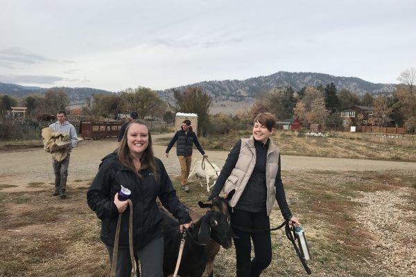 Volunteering at Growing Gardens